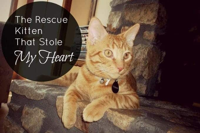 the-rescue-kitten-that-stole-my-heart